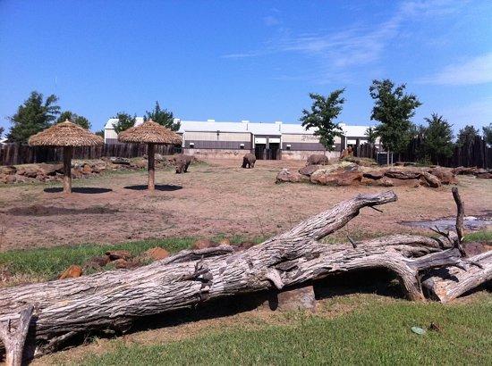 rhino-exhibit